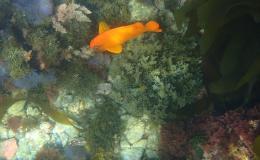 31-fish